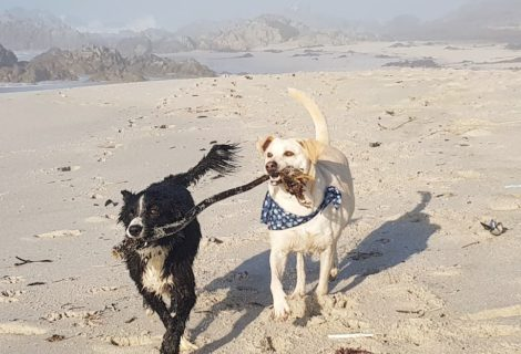 Pet-Friendly Accommodation Yzerfontein