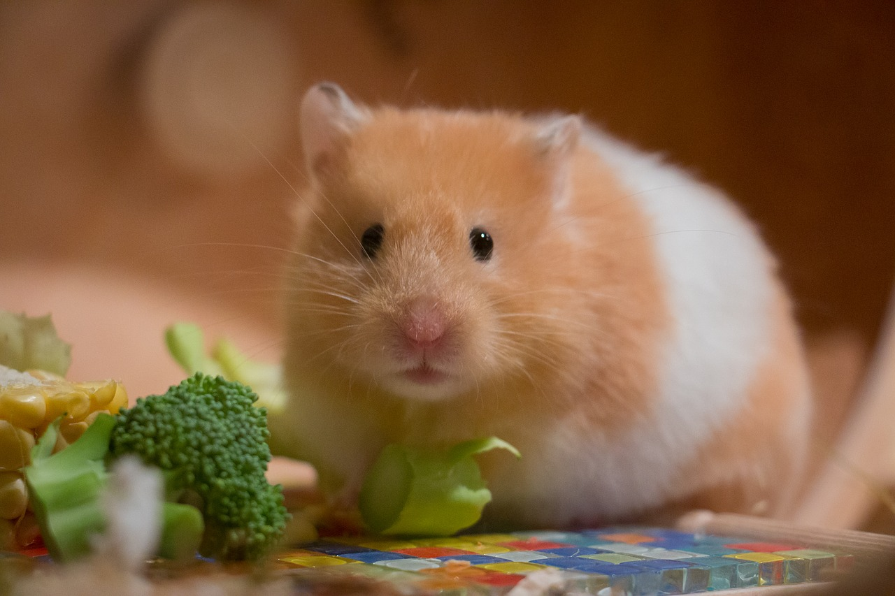 8 Things You Should Know before homing a hamster